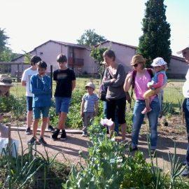 La fraise s'invite aux jardins partagés